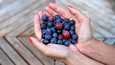 Käytä monipuolisesti eri marjoja: mansikkaa, mustikkaa, vadelmaa, tyrniä, lakkaa, karviaisia, viinimarjoja, puolukkaa, karpaloa...