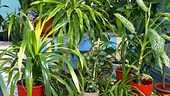 Oikea kukka oikeaan paikkaan: Helpoimmat huonekasvit kodin eri huoneisiin