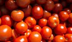 Tutkimuksen mukaan peräti 49 prosenttia suomalaisista säilyttää tomaattinsa ja kurkkunsa jääkaapissa.