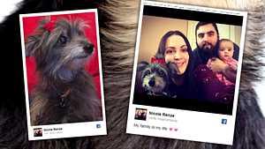 Nainen adoptoi vanhan koiran – paljastuikin samaksi koiraksi, joka oli hänellä nuorena