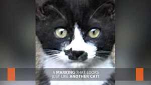 Kissan nenänpäässä on aivan kuin toinen kissa – katso, jos et usko