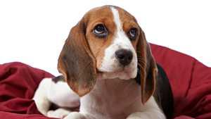 Tyttöystävä vaati: koira tai minä - poikaystävältä nokkela ratkaisu