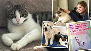 Stellan, 9, sydäntä särkevä etsintäkuulutus herätti huomion: Jaakko-kissa pääsi vihdoin kotiin – kuvat iloisesta jälleennäkemisestä