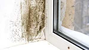 Haju voi paljastaa kosteusvaurion – näin pidät kotisi ilmankosteuden kurissa