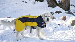 Eläinlääkäri kertoo: Yksi merkki kertoo, kärsiikö koirasi kovasta pakkasesta