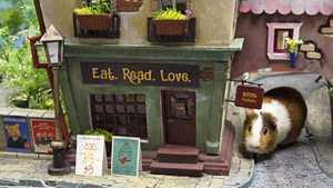 Hamstereille rakennettiin hurmaava minikaupunki
