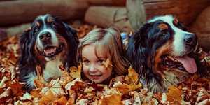 Lemmikki lapsiperheessä – ota nämä neljä asiaa huomioon!