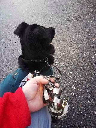 Junaan jääneet koiran remmi jäi roikkumaan junan ulkopuolelle ja meni osittain säpäleiksi.