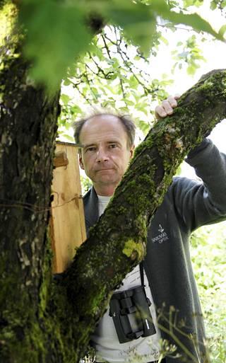 Birdlifen Jan Södersved kiinnittää nykyisin huomiota, jos talitiainen laulaalurittaa vanhalla titityy-mallilla.