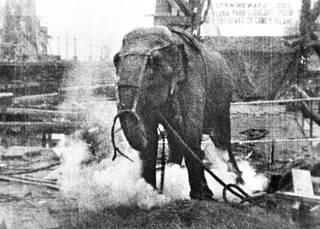 Sirkuselefantti Topsyn lopettamisnäytös huvipuistossa 1903 huipensi mediasodan, jota Edison kävi kilpailijansa Teslan vaihtosähköä vastaan. Savu nousee kuolevan eläimen jaloista.