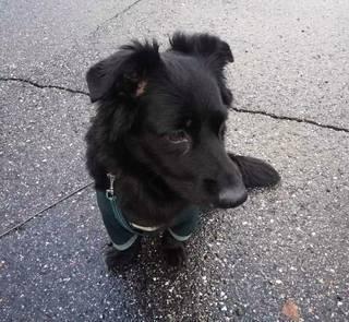 Sekarotuinen koira jäi vahingossa junaan, kun omistaja, noin kolmekymppinen mies, jäi junasta Vantaan Martinlaaksossa sunnuntaina.