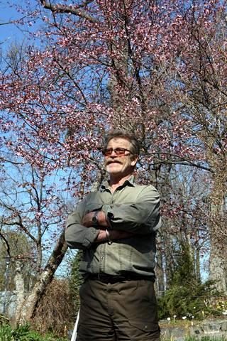Arno Kasvi kuvattuna kirsikkapuiden edessä keväällä kuusi vuotta sitten.