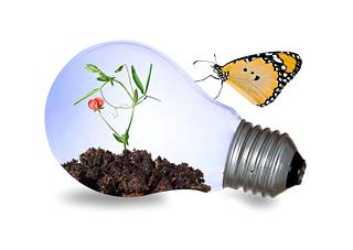 Parhaita vaihtoehtoja kasvien valaisemiseen ovat tietenkin niitä varten kehitetyt erikoisvalaisimet ja -lamput.