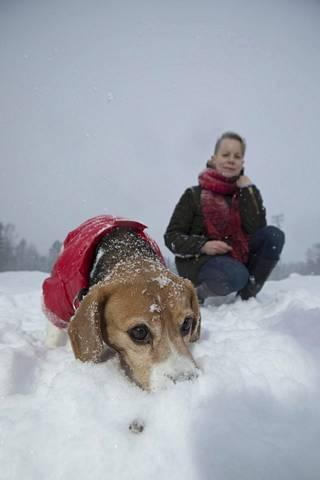 Mia Takulan beagle Junnu on entinen koe-eläin Suomesta. Asja on entinen katukoira Venäjältä.