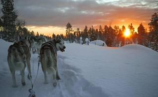 Tammikuun lopulla aurinko nousi kaamoksen jälkeen ensimmäistä kertaa Muotkatunturin erämaassa. Tinja Myllykangas kävi koirineen katsomassa.