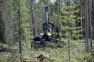 """Sipilän mukaan """"Suomen on voitava jatkossakin hyödyntää metsävarojaan täysipainoisesti""""."""