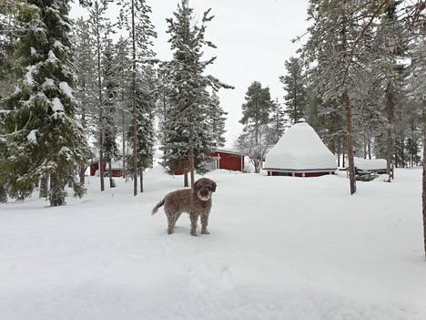 Kolarin Pasmajärvellä riitti lunta 17. helmikuuta, kun Markus Nordberg ulkoili Selma-koiran kanssa.