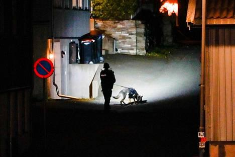 Poliisikoira tutkiskeli katua Kongsbergissä.