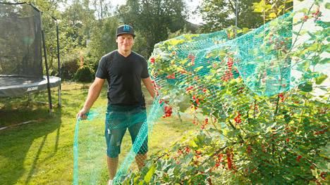 Tuukka Mäntylä suojaa viinimarjapensasta.
