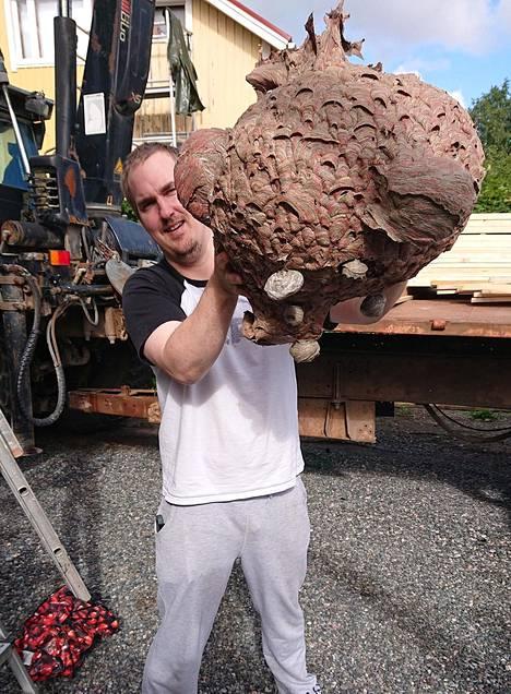 Aleksanteri Alanen mittasi ampiaispesän ympärysmitaksi leveimmältä kohdalta 140 senttimetriä. Hän arvioi, että pesä painoi noin kilon.
