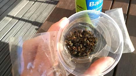 5 tehokkainta tapaa karkottaa ampiaiset pois - suodatinpussikikka toimii todistetusti