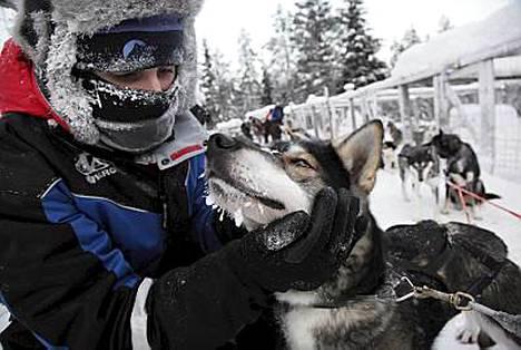 Lontoolainen Claire Elsdon vietti Suomessa viisi päivää huskyjen kanssa.