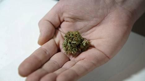 Kannabis on Suomen käytetyin huumausaine.