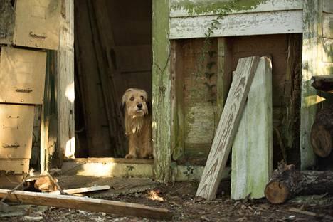 Benjin ihmisystävät joutuvat vaaraan. Mikään muu ei auta kuin että koira lähtee itse pelastusyritykseen.