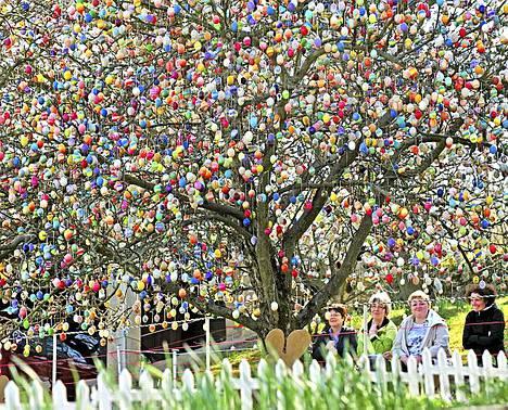 Tämä puu on koristelut 10 000 pääsiäismunalla. Puun tarkempi paikka on Saalfeld, Saksa.