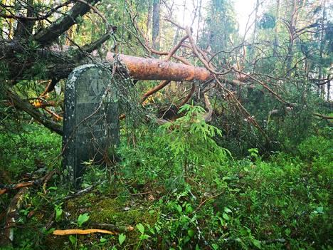 Suositun nähtävyyden Paltaniemen kuvakirkon vieressä olevalla vanhalla hautausmaalla oli kaatunut kymmeniä puita.