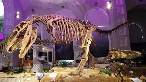 Massiiviset dinosaurusten luurangot hallitsevat Elämän historia -näyttelyä.