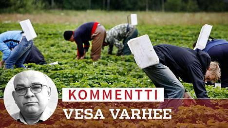 Marjanviljelijöiden tämän kesän poimijapula on surkuhupaisan absurdi esimerkki Suomen työmarkkinoiden toimimattomuudesta. Tilannetta lievittäisi, jos esimerkiksi tilapäiset lisäansiot eivät leikkaisi työttömyys- ja muita tukia kuten nyt, Vesa Varhee kirjoittaa.
