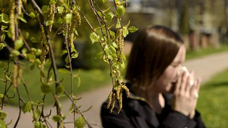 Koivun siitepölykausi on harvinaisen vaikea – parin viikon aikana on nähty kaikki mahdolliset allergian aiheuttamat vaivat, sanoo lääkäri