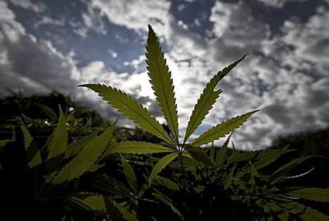Yhdysvallat on käyttänyt miljardeja dollareita huumeiden vastaiseen taisteluun.