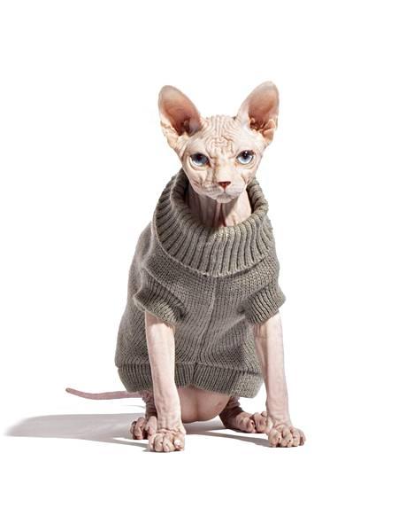 Vesa Keskisen kissa Lucky Boy sairastui flunssaan.