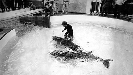 Vuonna 1985 uusi delfinaario veti noin tuhat maksavaa katsojaa.