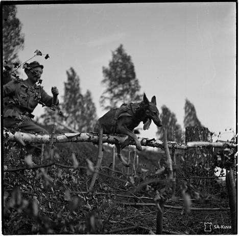 Sotakoirien toipilaskoti, jossa rintamalla olleet koirat saivat kertauskoulutusta.