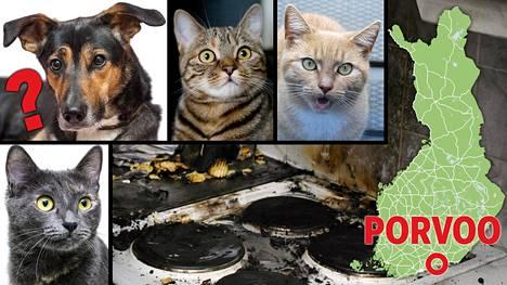 Kuvituskuvan koira, kissat, liesi ja sipsit eivät sijaitse Porvoossa, jossa tapahtui sunnuntaina todennäköisesti eläinavusteinen tulipalo.