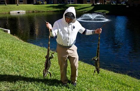 Mies kantoi kahta horrokseen vaipunutta iguaania Floridan Lake Worthissa.