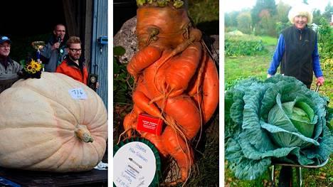 Suomesta löytyy puolen kilon omenoita suurempiakin ennätyskasviksia.