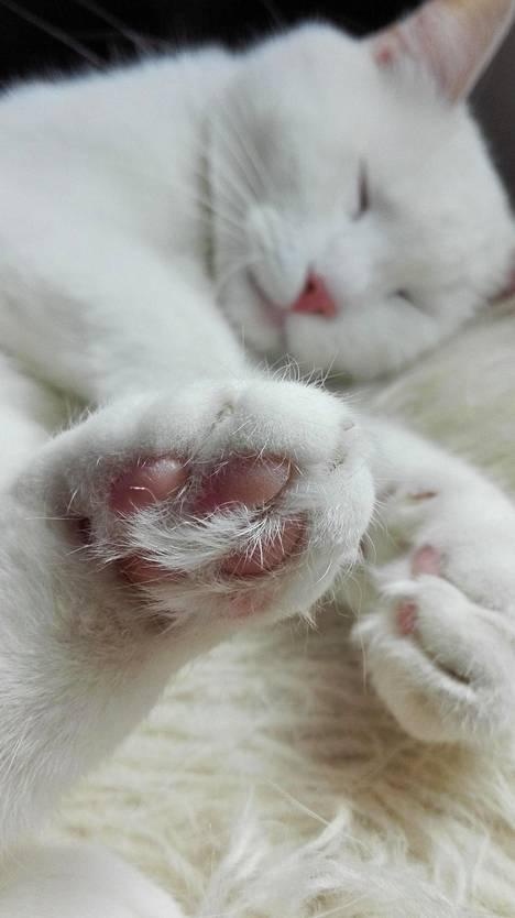 Kissan Tassu