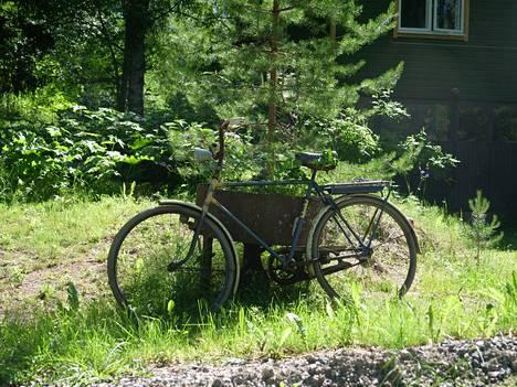 Leon vanha pyörä seisoo hänen lähinaapurinsa Seija Rinkisen pihamaalla.
