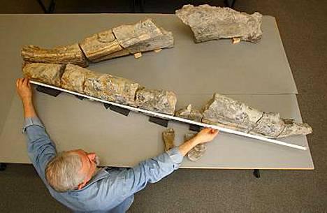 Paleontologi Richard Forrest mittaili fossiilista jättileukaa.