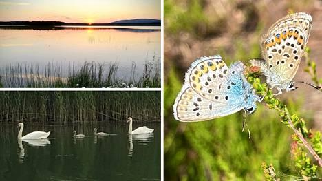 Lauantaina vietetään Suomen luonnon päivää.