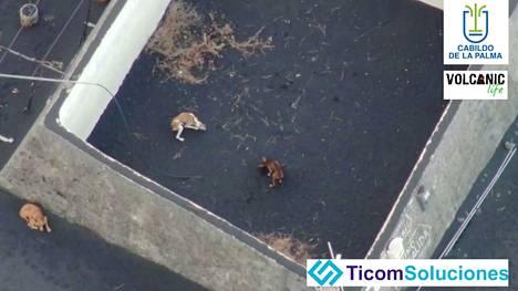 Kuvassa näkyy kolme kuudesta koirasta, jotka on nyt pelastettu.