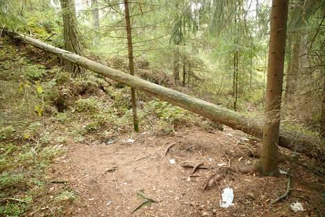 Seksuaaliseen toimintaan viittaavia todisteita löytyi muun muassa tämän kaatuneen puunrungon tuntumasta.