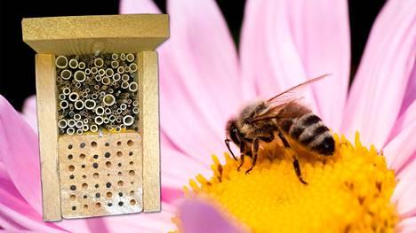 Puutarhan hyödylliset ötökät ansaitsevat oman hyönteishotellin!