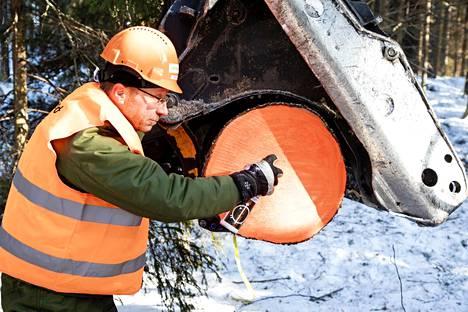 Suuresta kuusesta katkaistut tukit maalattiin jo metsässä merkkimaalilla, että puutavara ei katoasi jalostusmatkan aikana. Lautoja kuljettanut kontti varustettiin myös satelliittipaikantimella.