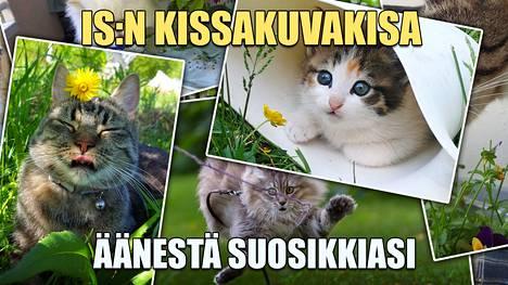 IS:n kissakuvakisan 30 hurmaavaa semifinalistia julki – äänestä suosikkiasi!