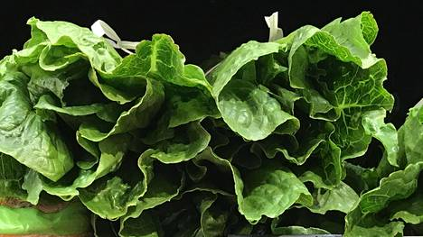 Roomansalaatti levittää bakteeria Yhdysvalloissa.